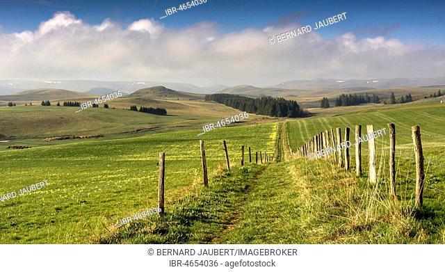 Path between pastures, Cezallier massif, Puy de Dome department, Auvergne, France