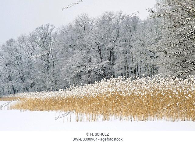 shore of a frozen and snowbound lake, Germany, Saxony, Oberlausitz