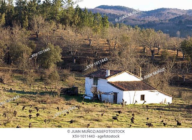 Vineyard. Natural Park and Picos de Aroche. Huelva. Andalucia. Spain