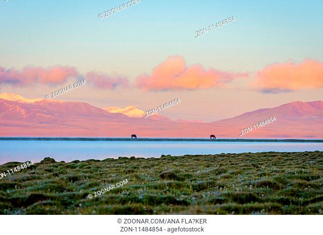 Song kul lake with two horses and purple mountain in background in sunrise, Kyrgyzstan