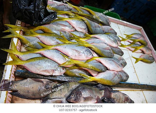 Yellow fin fishes for sale at Pasar Flamboyan fish market, Pontianak, West Kalimantan, Indonesia