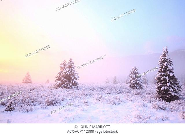 Moose Meadows at sunrise, Banff National Park