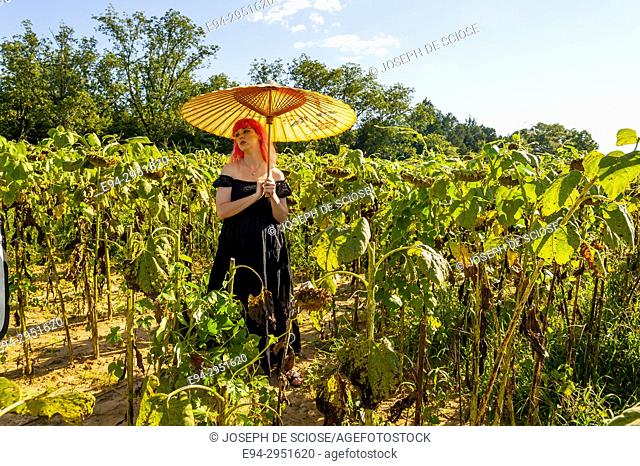 A 25 year old woman with pink hair, wearing a long black dress in a field of drying sunflowers holding a parasol, looking away from the camera