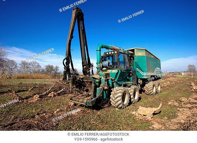 Machine crushing old trees to make biomass  LLeida  Spain