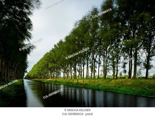 Trees on a stormy day, Leopold Canal, Damme, West Flanders, Belgium