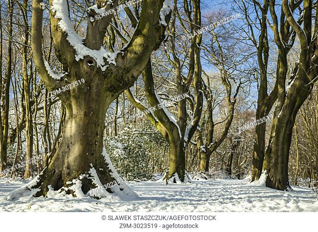 Stanmer Park in snow, East Sussex, England. South Downs National Park
