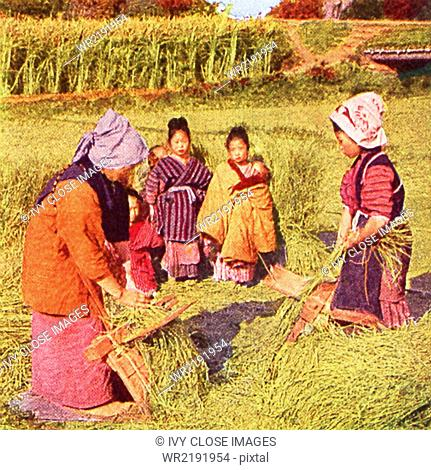 This scene in Japan dates to 1909 and shows women combining out flax seed