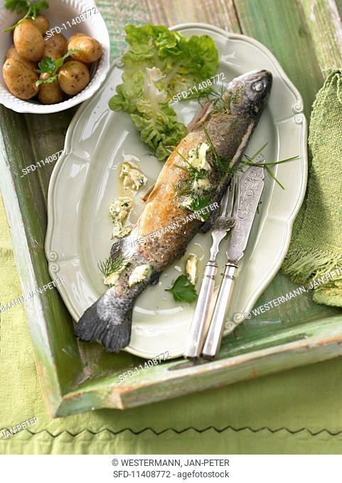 Fried common whitefish from Lake Constance with herb butter
