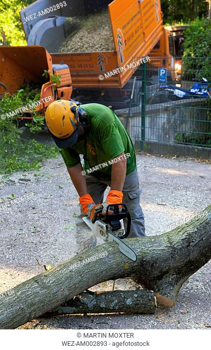 Lumberjack cutting up logs from on treetrunk