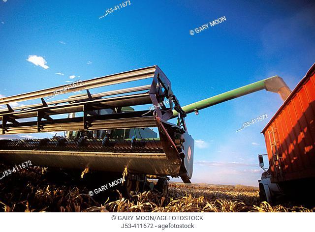 Transferring corn from combine to grain truck. Kansas. USA