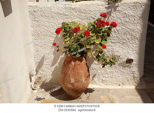 Geranium flowers in a pot, Naxos, Cyclades Islands, Greek Islands, Greece, Europe