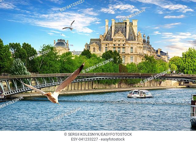 Seagulls over Seine river in Paris, France