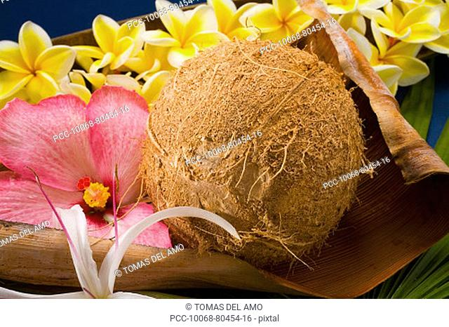 Studio shot of a coconut with flowers