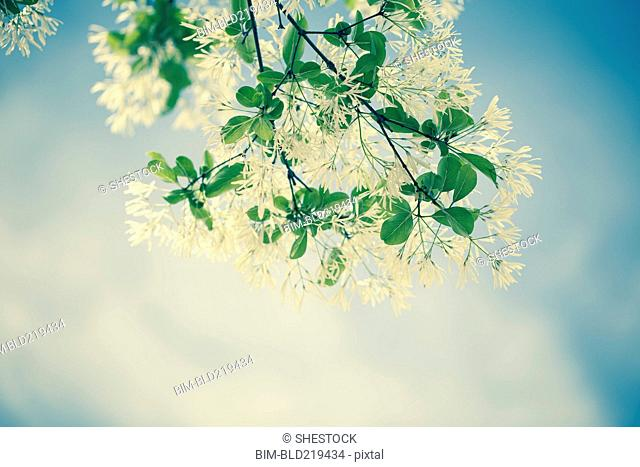 Low angle view of flowers growing on plant branch