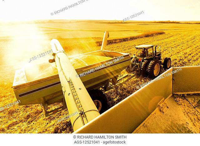 Combine unloads into a grain wagon during corn harvest, near Nerstrand; Minnesota, United States of America