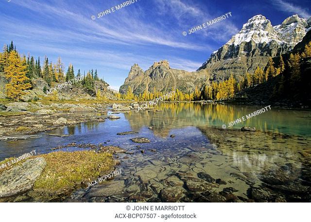 Mount Huber, the Opabin Plateau and autumn larches, Lake O'Hara region, Yoho National Park, British Columbia, Canada