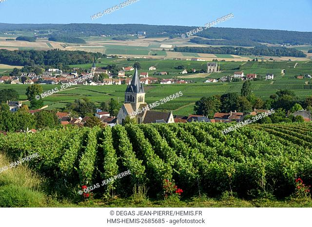 France, Marne, Ville Dommange, mountain of Reims, church Saint Lie of the 12th century in the middle of the vineyards of Champagne at dawn with Sacy village in...