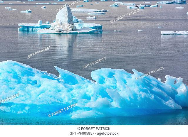 FLOATING ICEBERGS THAT SEPARATED FROM THE GLACIER SNOUT, FJORD OF NARSAQ BAY, GREENLAND