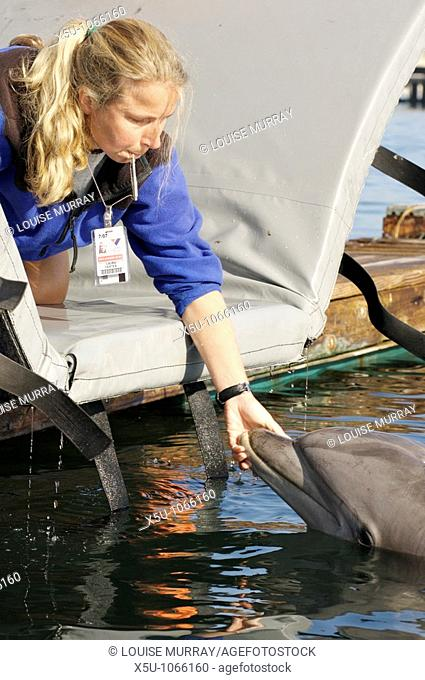 SPAWAR Navy Marine Mammal Programme, San Diego November 2006  Trainer Laura Yates with 40 year old female dolphin, Blue  The hardest thing to teach a dolphin is...