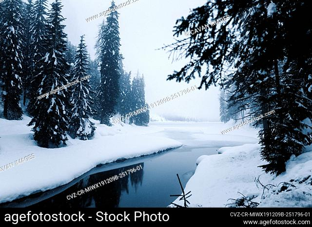 Snow forest and river on a cold winter day