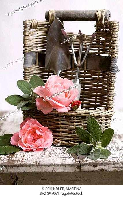Small basket with garden tools, sage and roses
