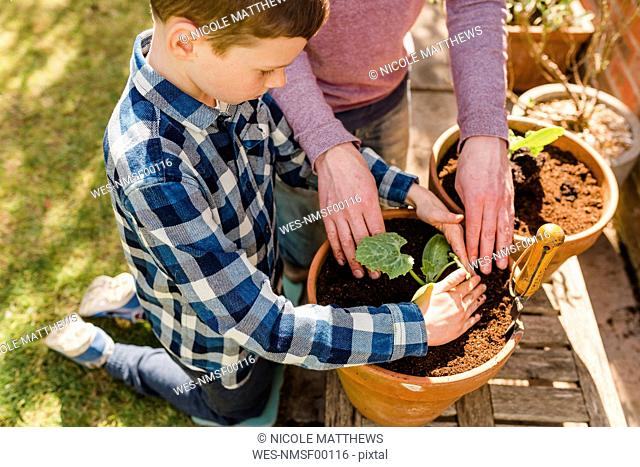 Father and son planting seedling together