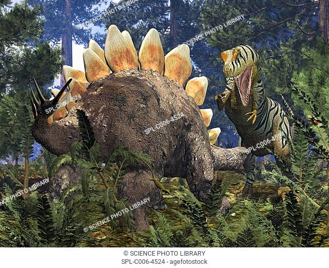 Jurassic dinosaurs. Computer artwork of an Allosaurus right confronting a grazing Stegosaurus left in a Jurassic redwood forest