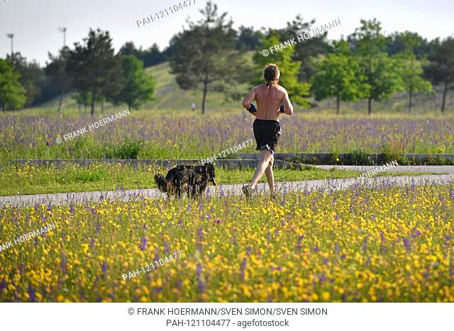 Jogger, man jogging with his dog in the green.Jogger, recreational sports, sports, jogging, jogging, running, running, running, fitness,   usage worldwide