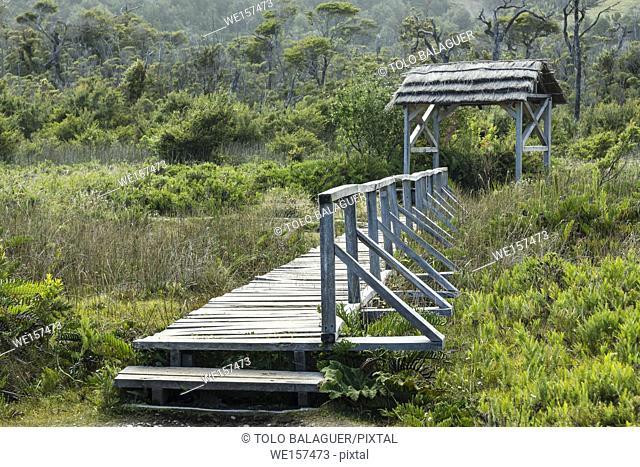 turberas, Parque Nacional Chiloé, Cucao, cordillera de la costa, archipiélago de Chiloé , provincia de Chiloé , región de Los Lagos, Patagonia
