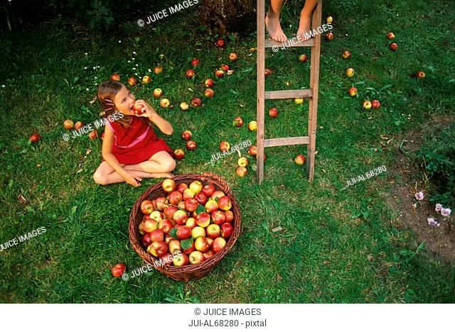 Child sitting on ground with bushel of apples, overview
