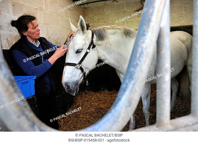 Reportage on a vet in Ham in the Somme area of France. Every day she travels all over the countryside in Northern France to owners' homes to care for all kinds...