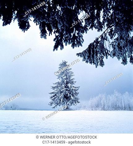 Germany, Schoenwald im Schwarzwald, Gutach, Gutach valley, Schwarzwald-Baar-Kreis, Black Forest, Baden-Wuerttemberg, winter landscape, misty
