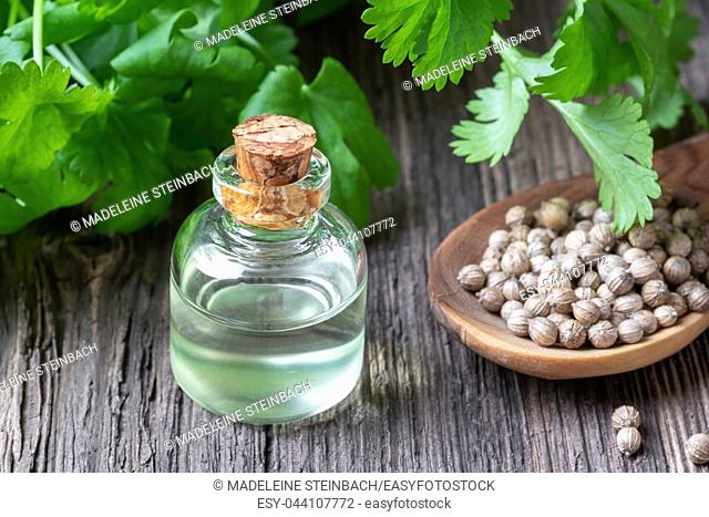 A bottle of essential oil with coriander seeds and fresh cilantro leaves