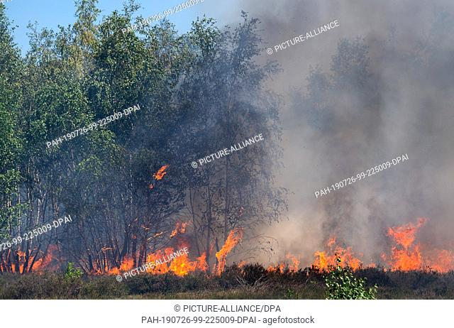 26 July 2019, Brandenburg, Jüterbog: Flames spread during a forest fire at a former military training area near Jüterbog