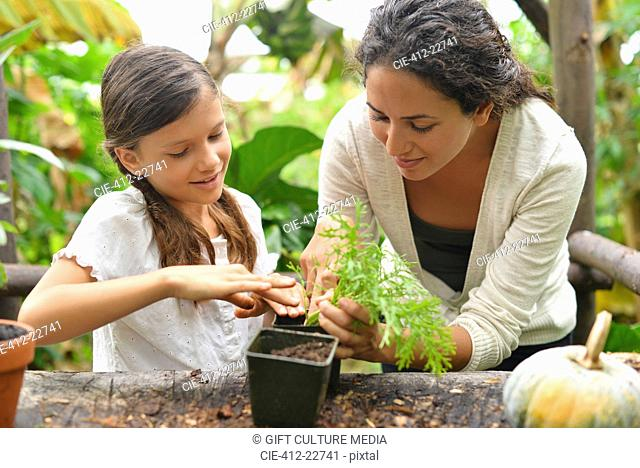 Woman and girl potting plants in garden
