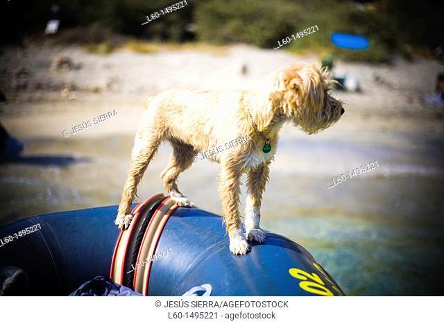 Dog in Cabo de Gata, Almeria, Spain