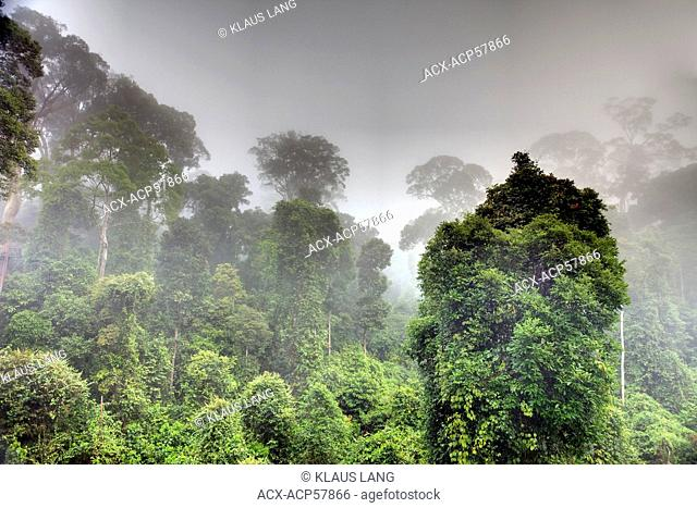 Morning Mist rising iff the Primary Dipterocarp Rainforest, Danum Valley Conservation Area, Borneo, Sabah, Malaysia