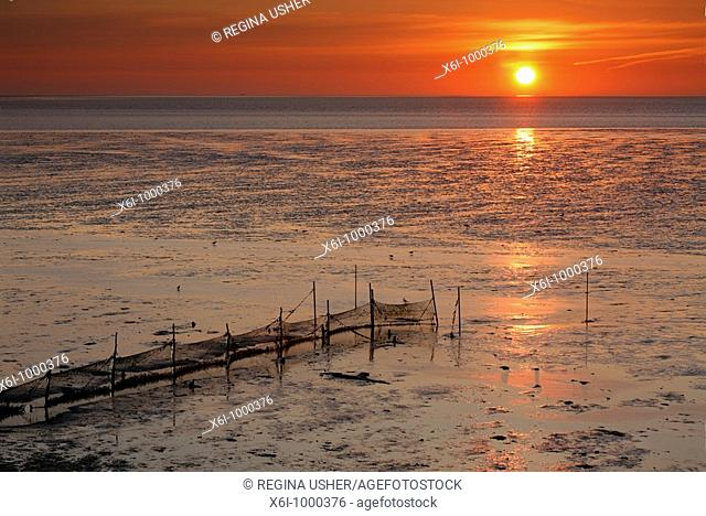 Sunrise on the Wadden Sea at low tide, Texel Island, Holland