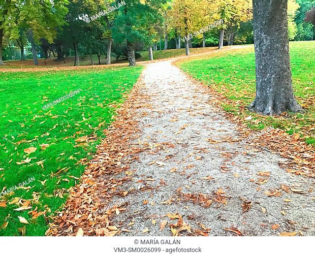 Path. The Retiro park, Madrid, Spain