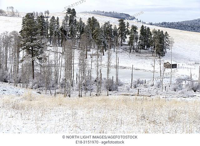 Canada, BC, Bridesville. A stand of trees on farmland in the interior of British Columbia