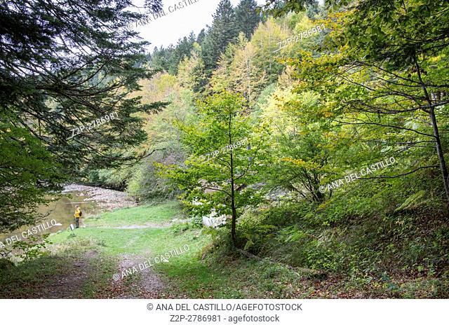 Autumn forest Selva de Irati fall beech jungle in Navarre Pyrenees of Spain