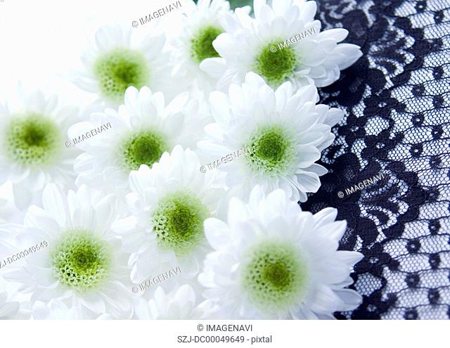 Spray mums and lace Mourning image