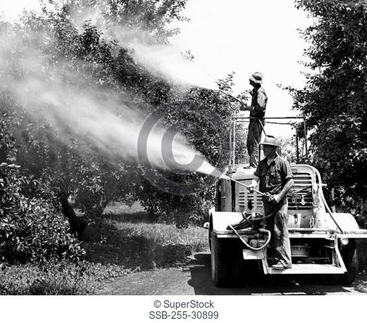 Farmers spraying insecticides in a grove, California, USA