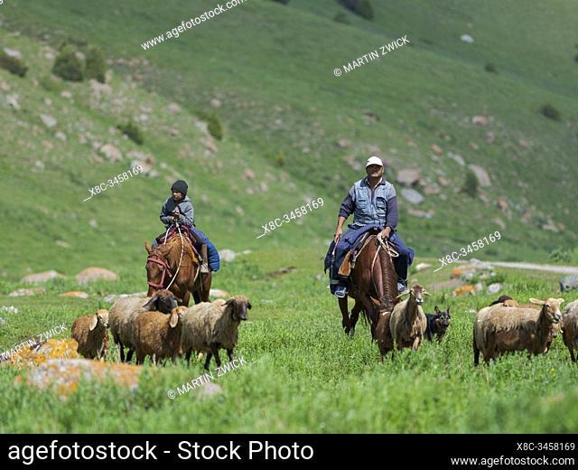 Shepherd on horseback. Sheep drive to their high altitude summer pasture. National Park Besch Tasch in the Talas Alatoo mountain range