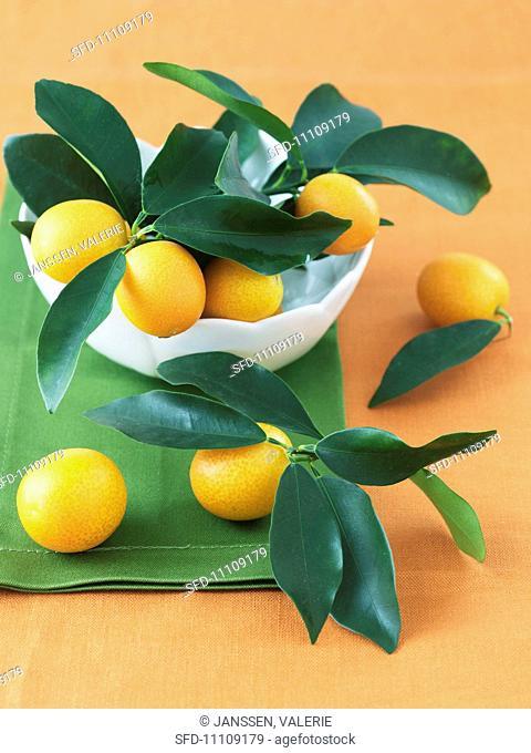Bowl of Fresh Kumquats with Leaves
