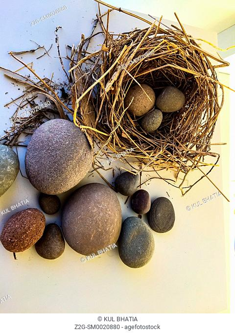 Nest eggs in stone: a real nest made with twigs and straw. Smooth stones of various shapes and sizes substitute for eggs in a modern art piece