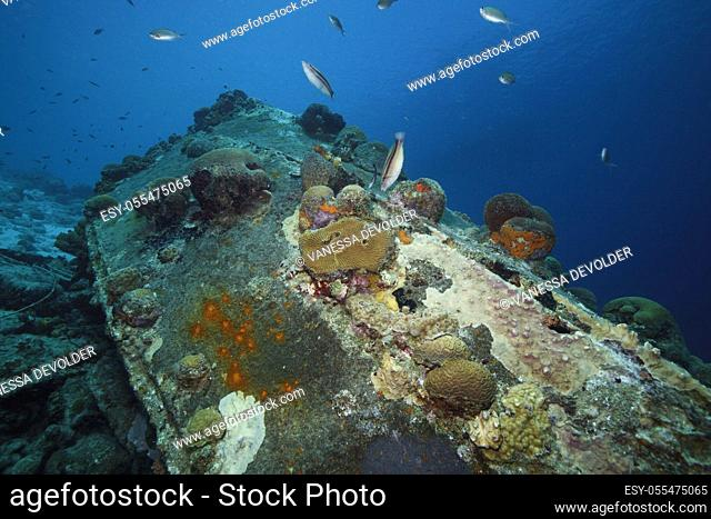 Detail of a shipwreck with corals in the Caribbean sea around Bonaire