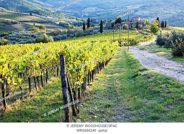 Vineyards and Farmhouse