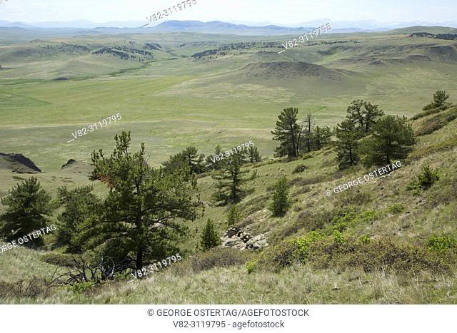 Prairie with pine, Crown Butte Preserve, Montana