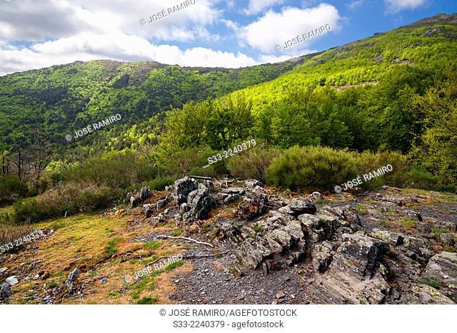 Canyon Snakes in the Natural Park del Hayedo de Tejera Negra. Sierra Norte. Guadalajara. Castilla la Mancha. Spain